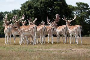 Deer stock 11 by Random-Acts-Stock