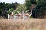 Deer stock 14