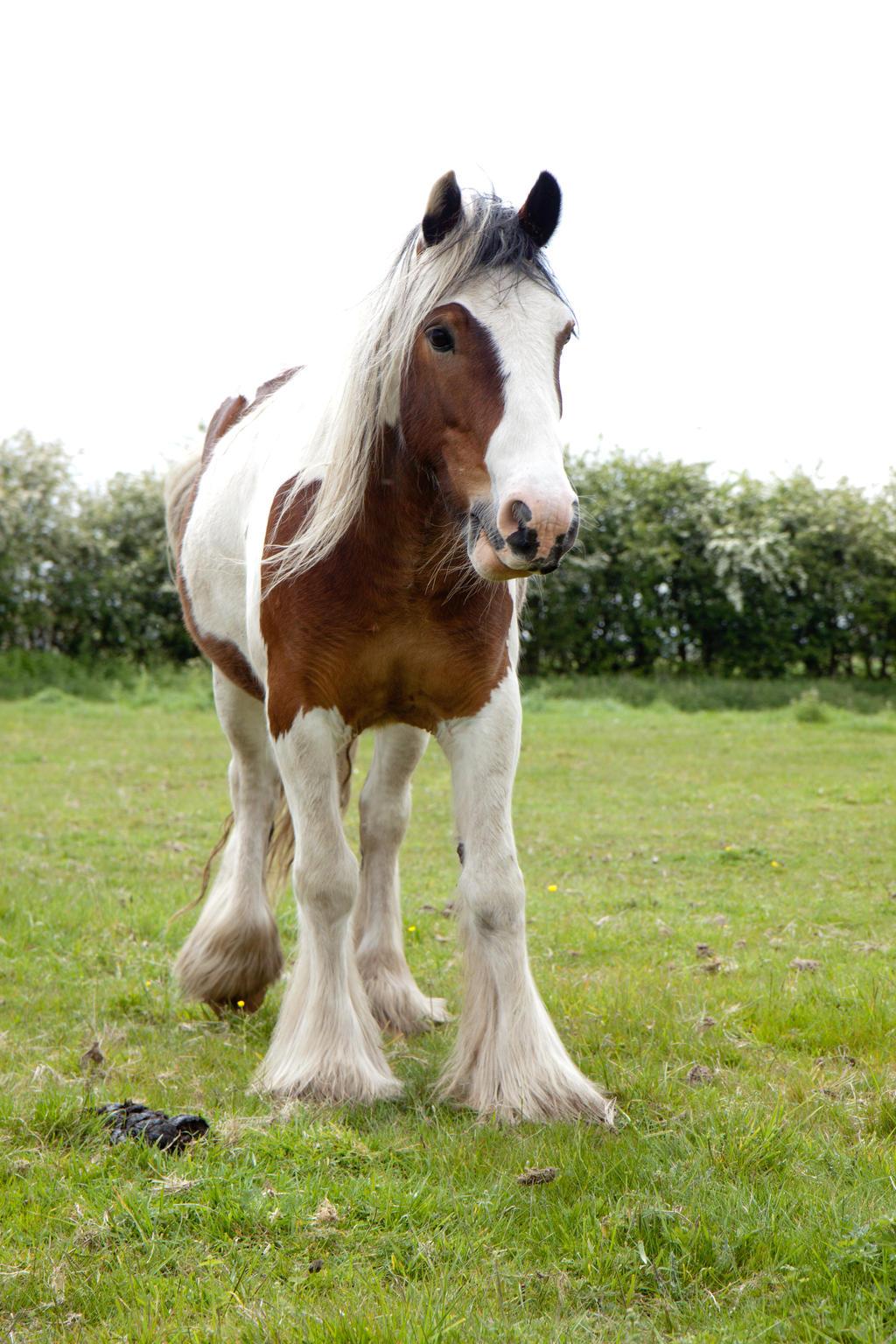 Pony stock 4 by Random-Acts-Stock