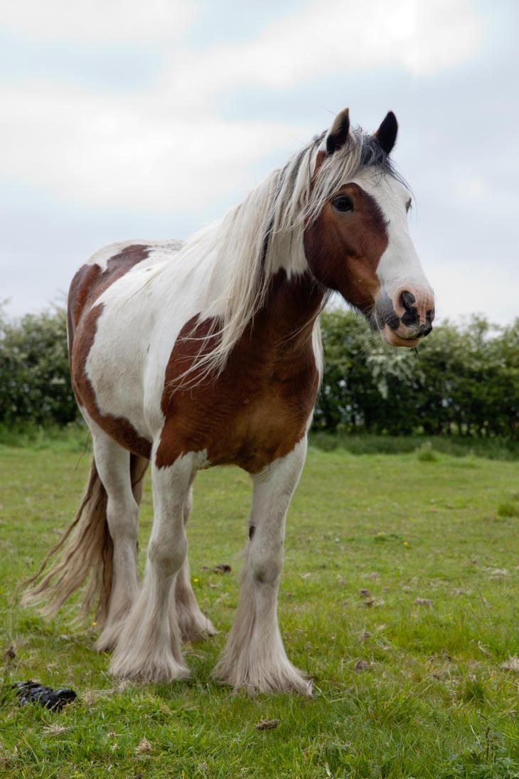 Pony stock 5 by Random-Acts-Stock