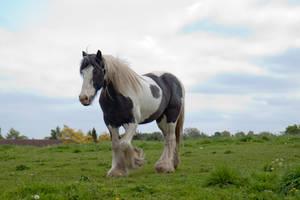 Pony stock 2