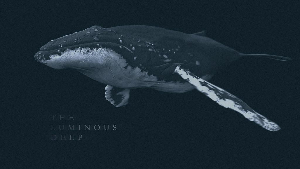 Whale texture - photo#3