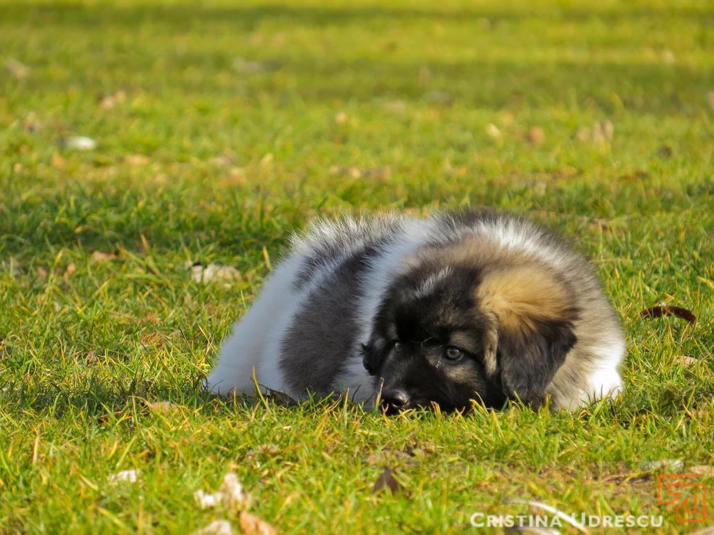 Puppy love by crisvsv