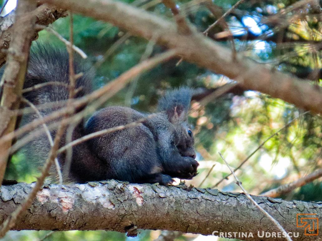 Fluffy Squirrel by crisvsv