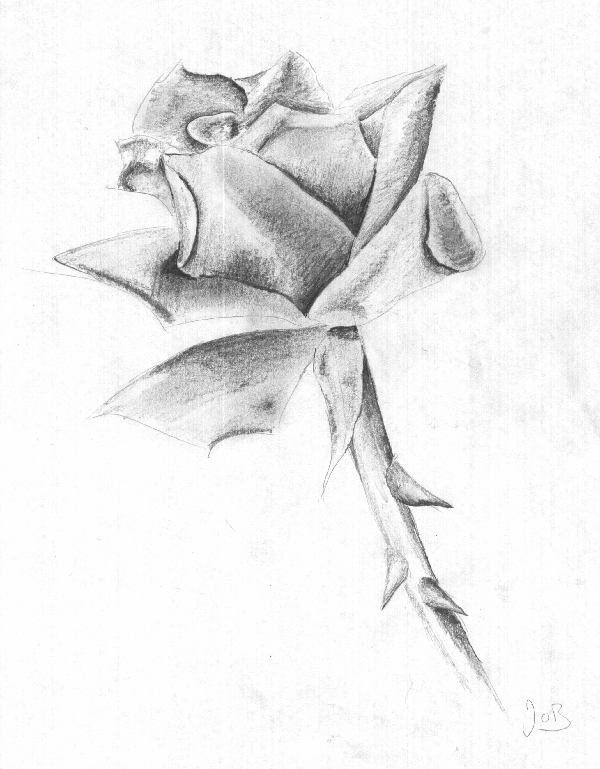 Rose Drawing In Pencil | Auto Design Tech