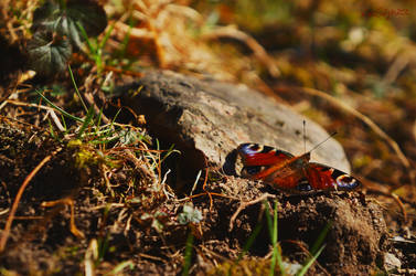 Butterfly by lumirah