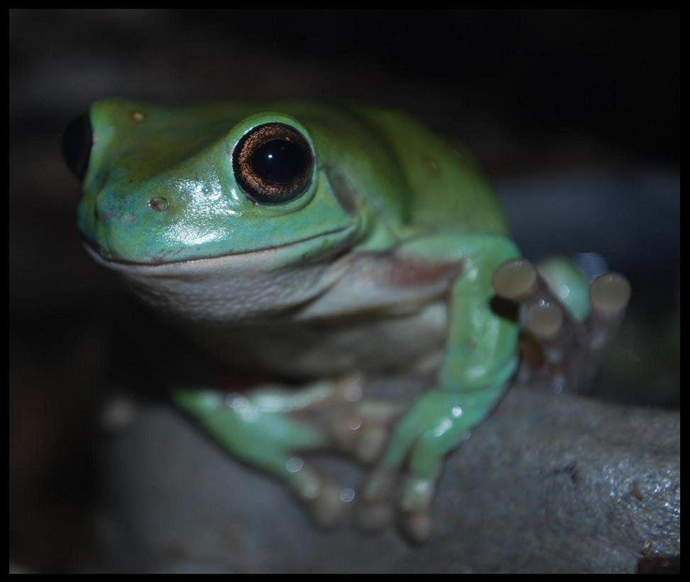 mr. frog by warmblackstar