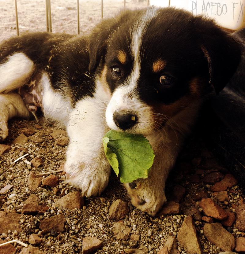 I Found a Leaf! by PlaceboFX