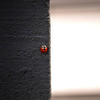 Beautiful but lonely.... by JENU89