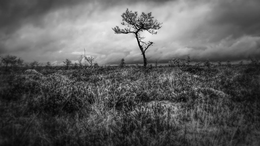 Mire tree. by MHelenelund