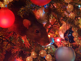 Christmas: Rat in a Tree by iloveramen88