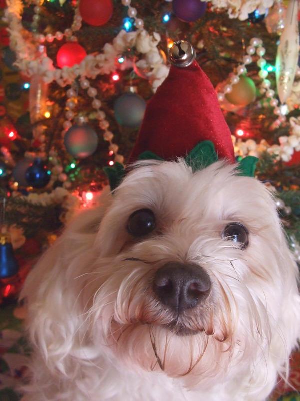 Christmas: Cutip ia an Elf by iloveramen88