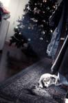 Feline christmas