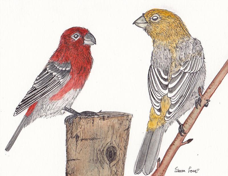 Pine Grosbeaks by Snapdragonfly-Ink