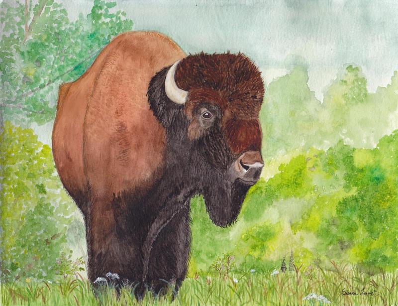 Bison by Snapdragonfly-Ink