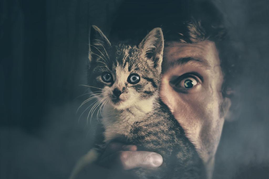 The catnapper by Elianne92