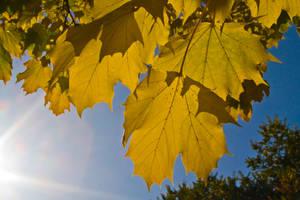 Autumn Sun by mark1624
