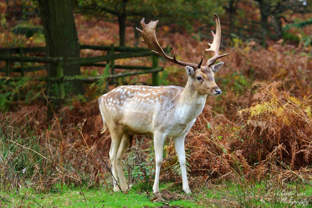 Deer Park by AngelsSunset