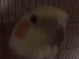 Yuki-whitebell's Profile Picture