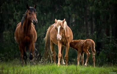 Wild Horses 1 by AnneMarks