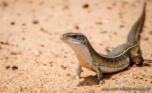Lizard by AnneMarks