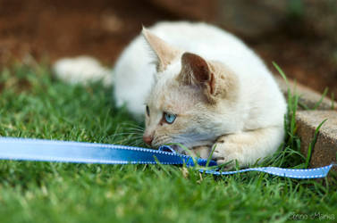 Stray Kitty by AnneMarks