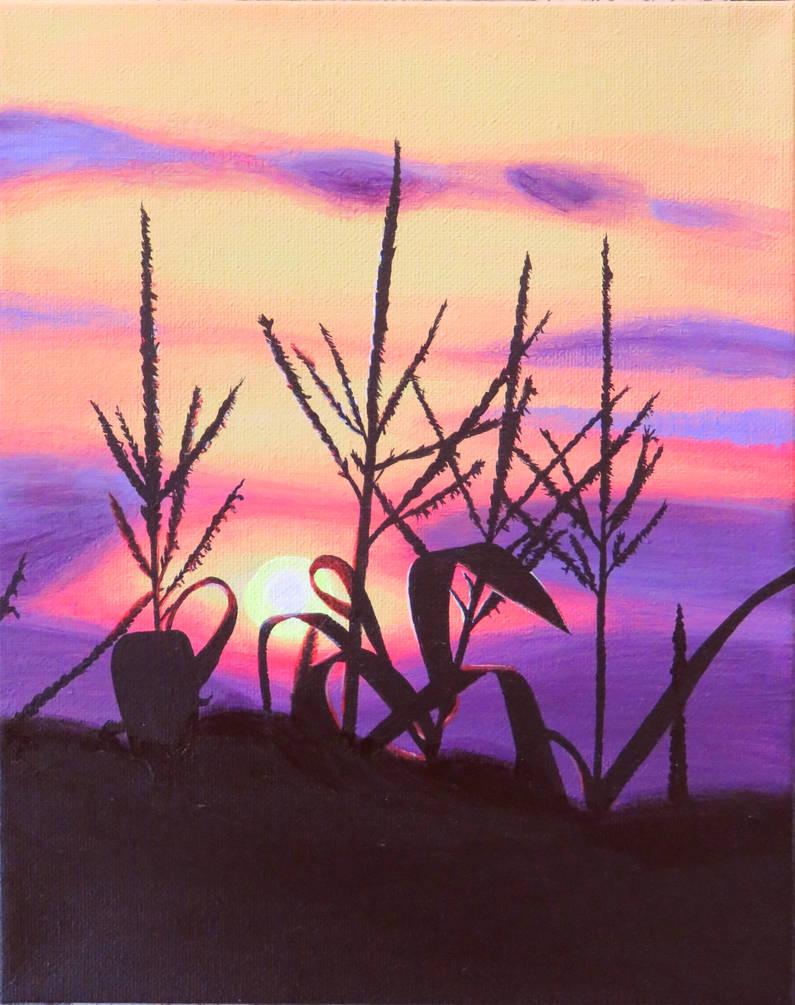 Summer corn sunset - take 2