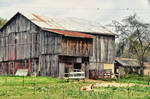 Pretty Horse in Front Of Old Rustic Barn