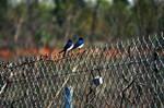 2 LITTLE BIRDS