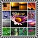 Naturephotographer Club 2 by Gloria-Gypsy-Designs