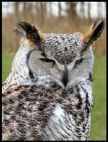 Canadian Eagle Owl by Escai