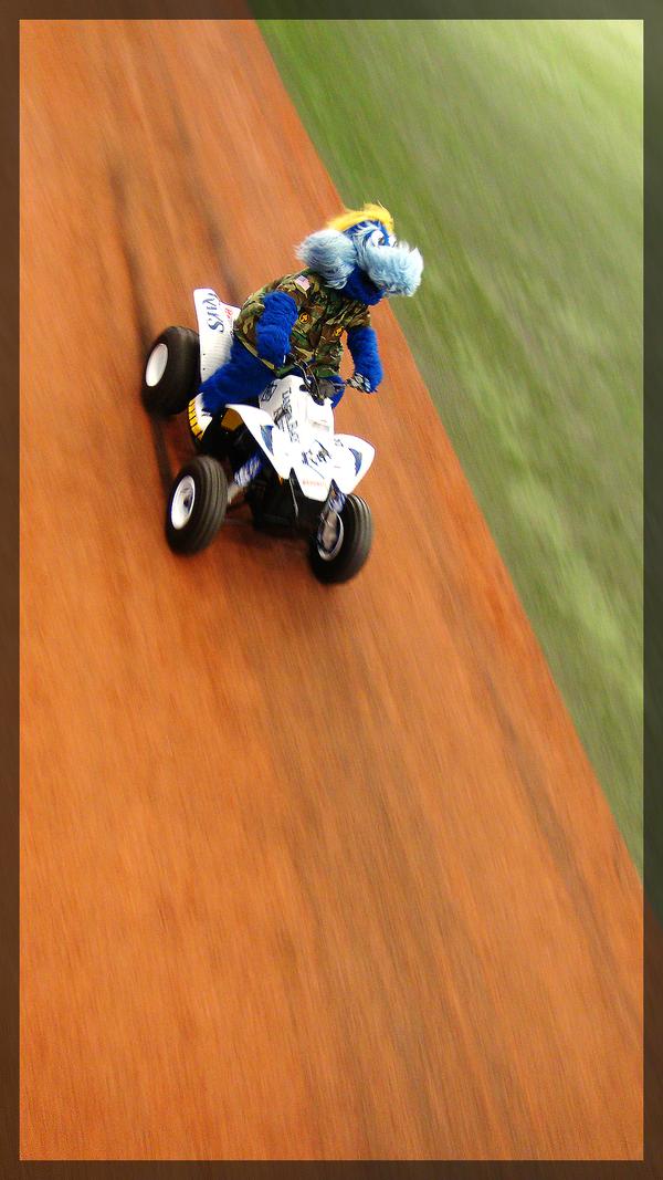 Raymond, Tampa Bay Rays Mascot by ADDanny