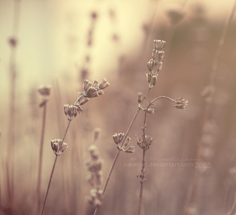 Soft dreams by Alukei