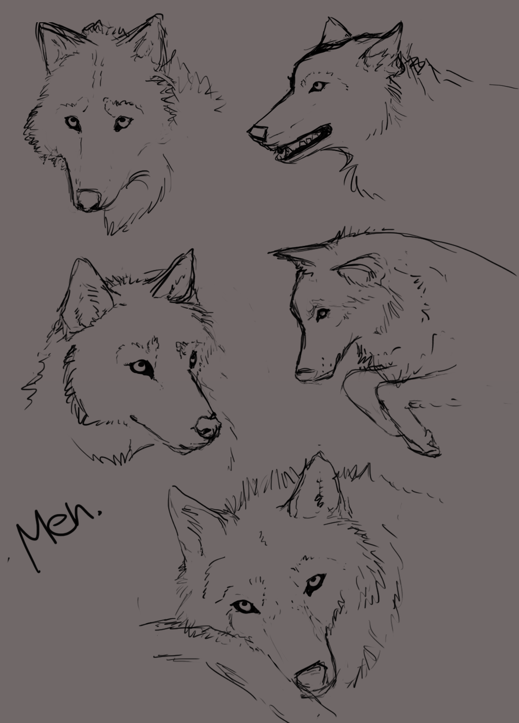 Wolf face practice by Alukei
