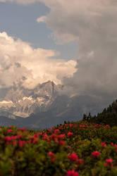 Blooming mountain