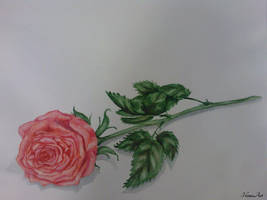 painting: A Rose