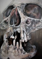 Skull study airbrush 24 x 17 ins card by Duttch