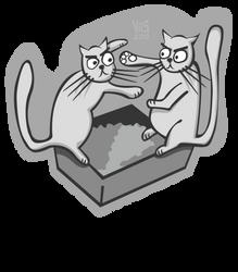 Catbox Catastrophe