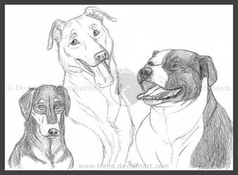 Maranda's Doggies by Freha