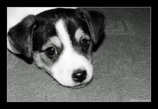 Giving Me Those Sad Puppy Eyes