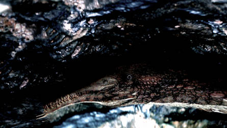 Cressi acrix at Strone Falls, Scanodon by nealromanek