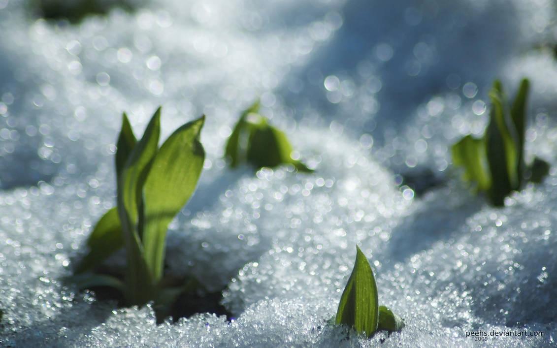 snow spring by peehs