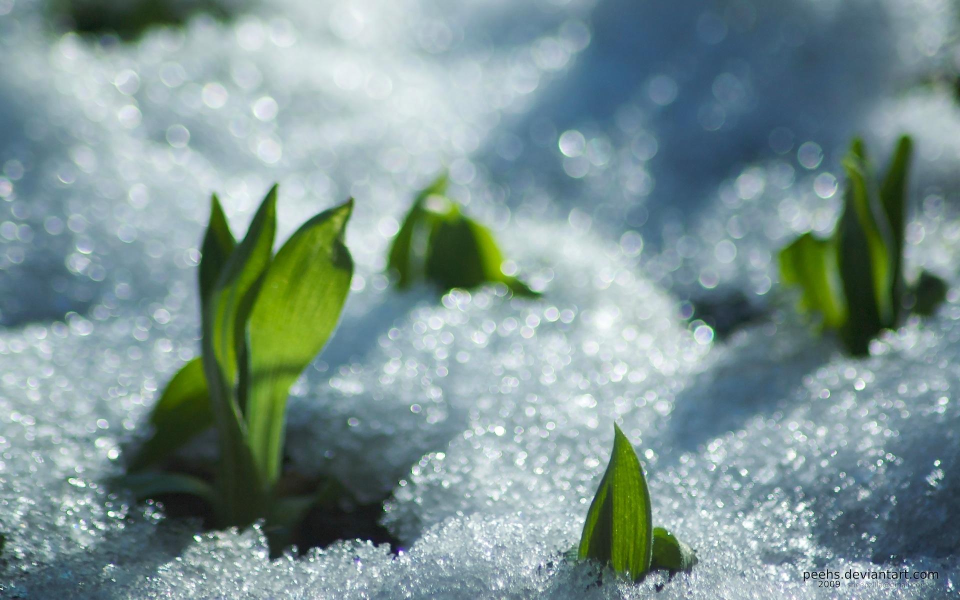 Image result for Nordic spring