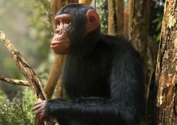 3D model of a chimpanzee by Mattiasedstrom
