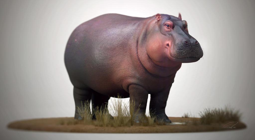 Hippopotamus by Mattiasedstrom