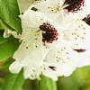 Flower by behindlove