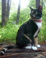cat by shnarfle-stock