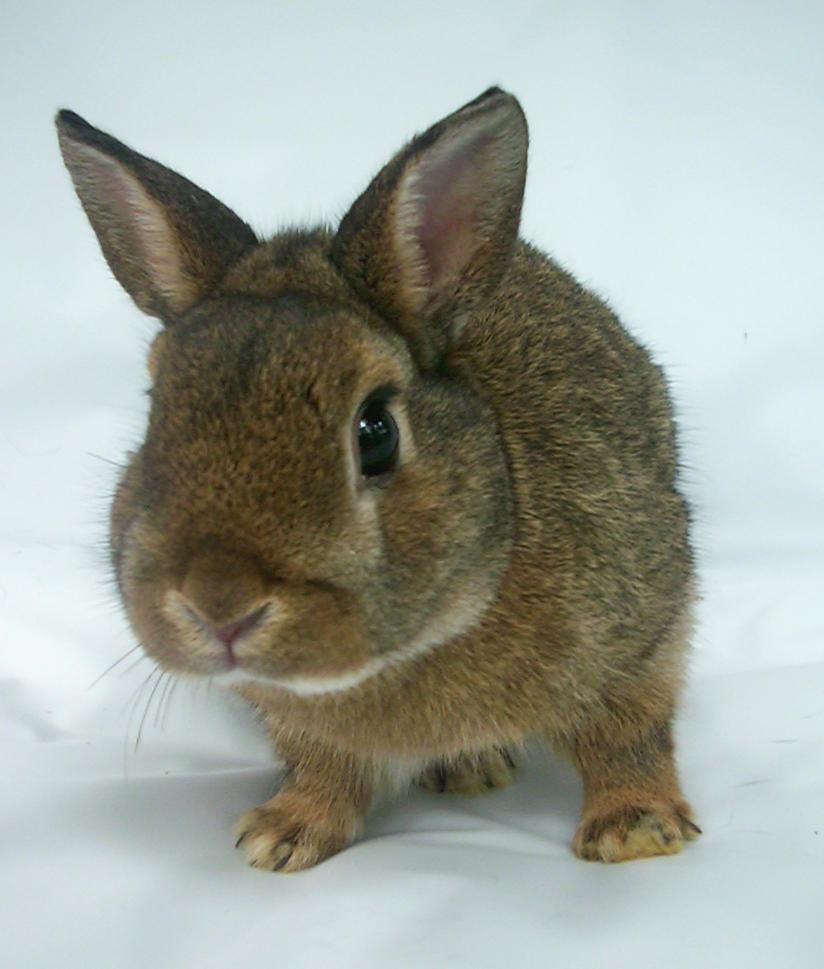 funny bunny by shnarfle-stock