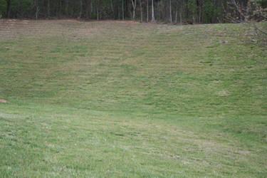 grass by shnarfle-stock