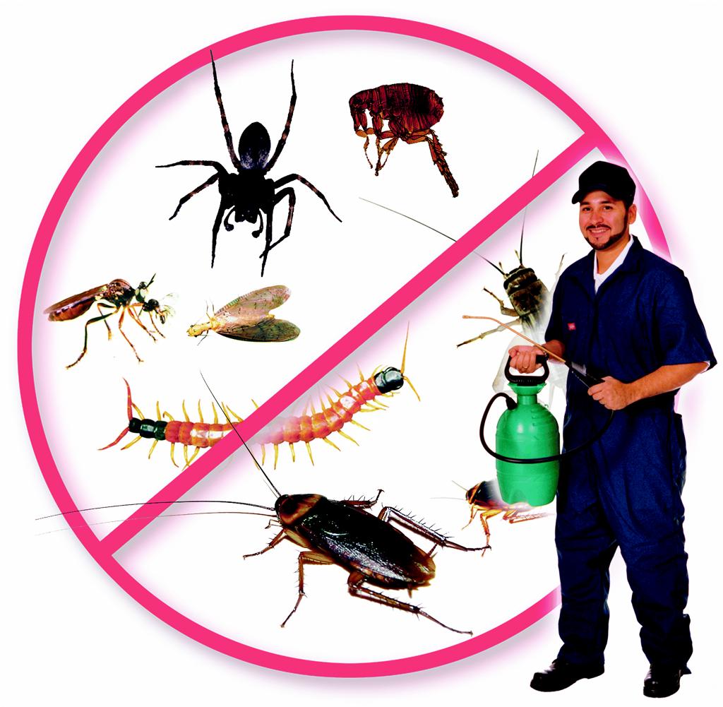 Особенности услуг дезинсекции насекомых